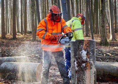 BPA Travaux Forestiers