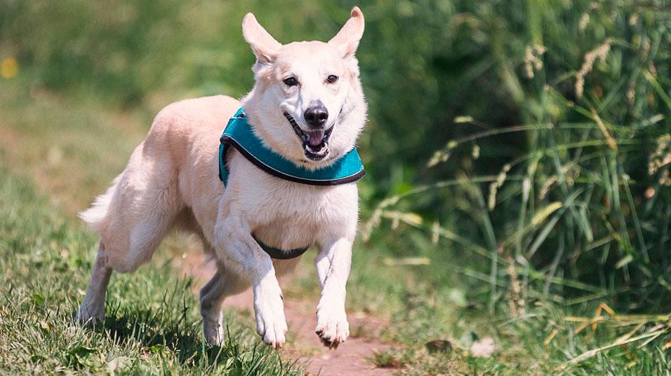Chien qui court - éducateur canin