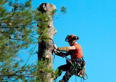 CS Arboriste Élagueur