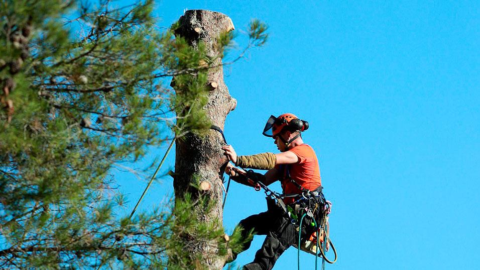 Arboriste élagueur