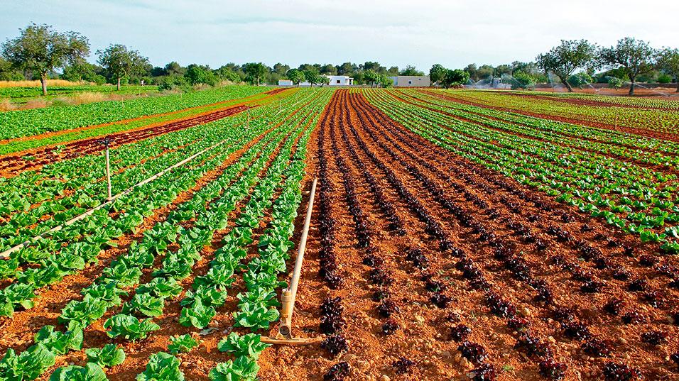 champs de production en agriculture biologique