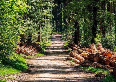Parcours d'Accès à la Qualification Métiers de la Forêt