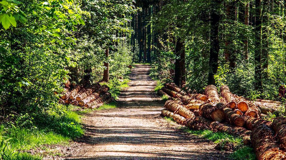 Les métiers de la forêt