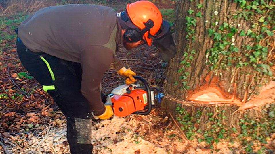 Abattage et tronçonnage d'un arbre