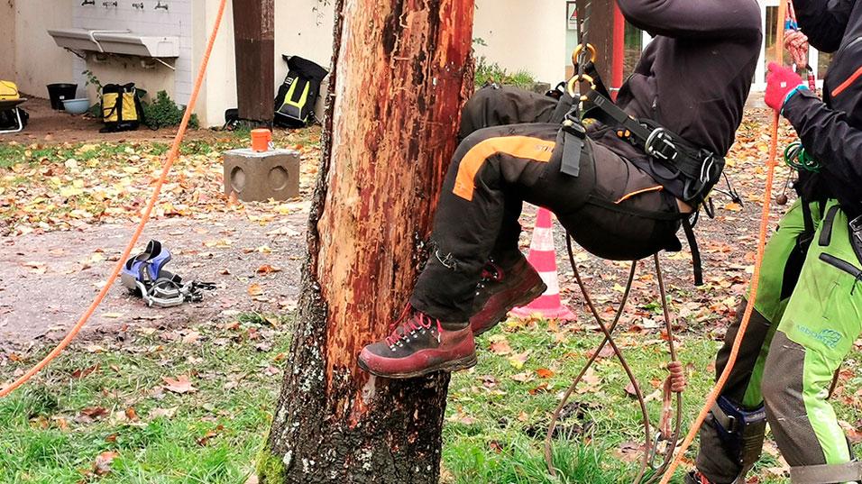 Grimpeur sauveteur dans l'arbre