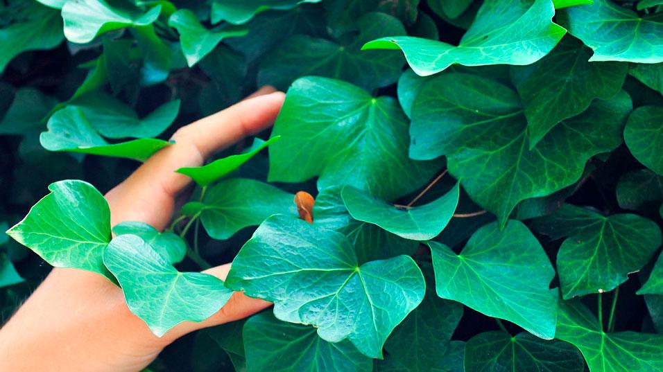 Reconnaissance des végétaux