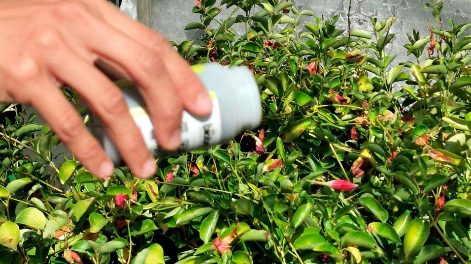 Traitement au produit phytosanitaire